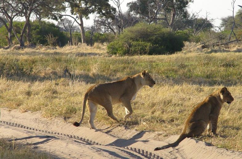 Botswana compact Self Drive