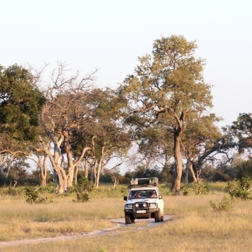 Moremi Game Reserve Botswana Self Drive