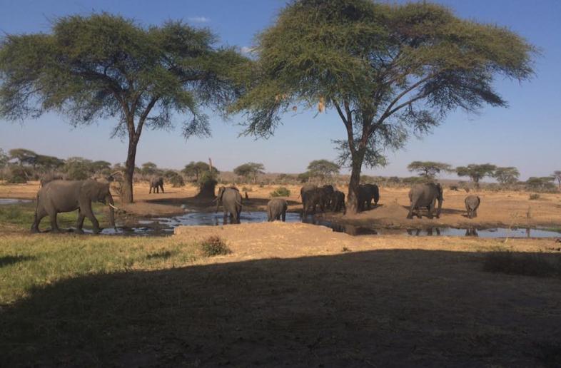 Senyati Safari Campsite