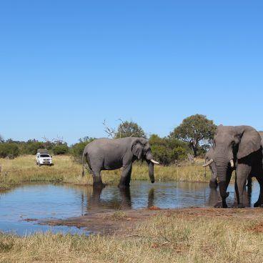 Botswana Self Drive