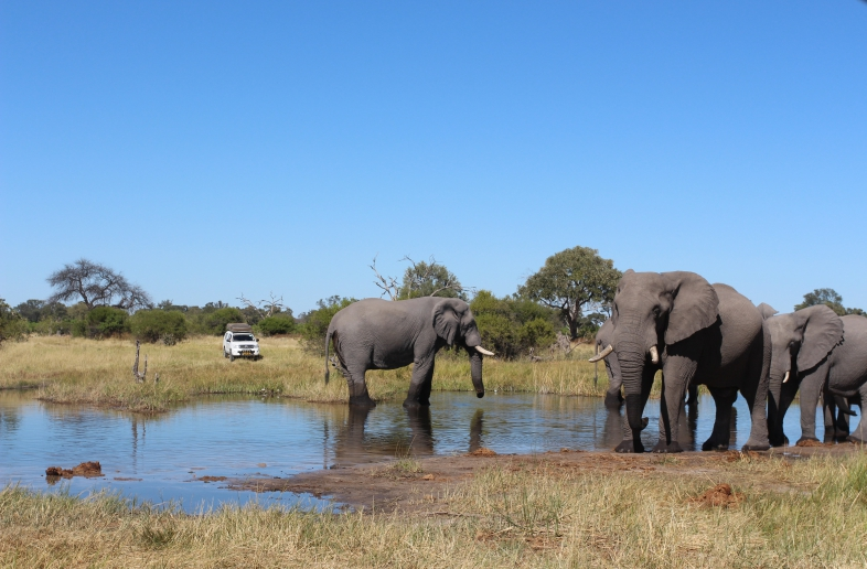 Botswana Wildlife & Salt pans Self Drive