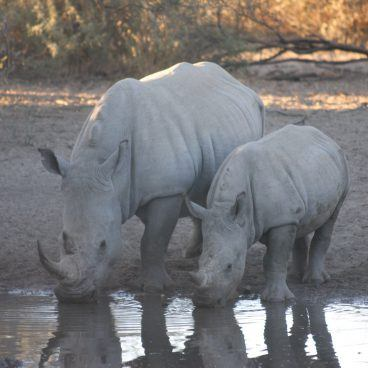 Rhino South Africa and Botswana