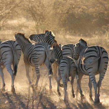 Namibie en Botswana reis