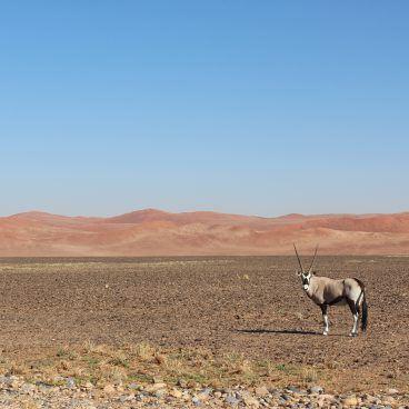 Namibië self drive Sossusvlei Gemsbok