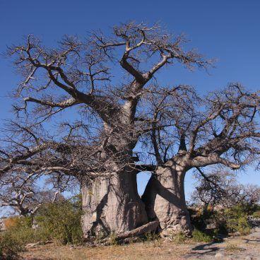 Botswana reis Kubu Island Botswana