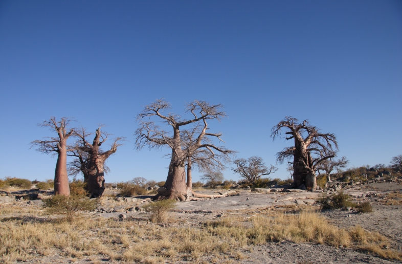 Namibia and Botswana Wildlife &  Salt Pans
