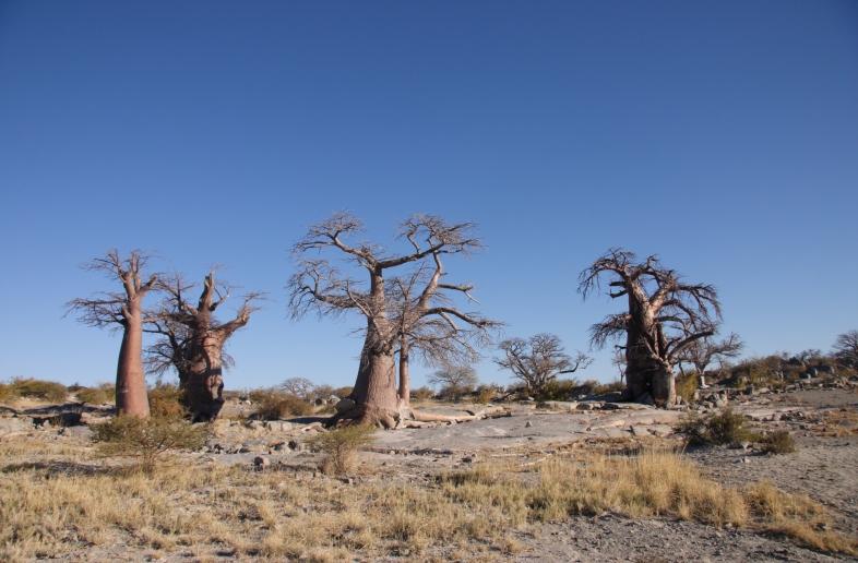 Namibië en Botswana wildlife en zoutpannen