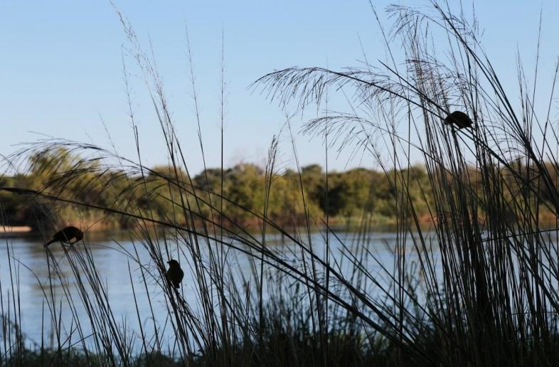 Okavango River Lodge – Campsite