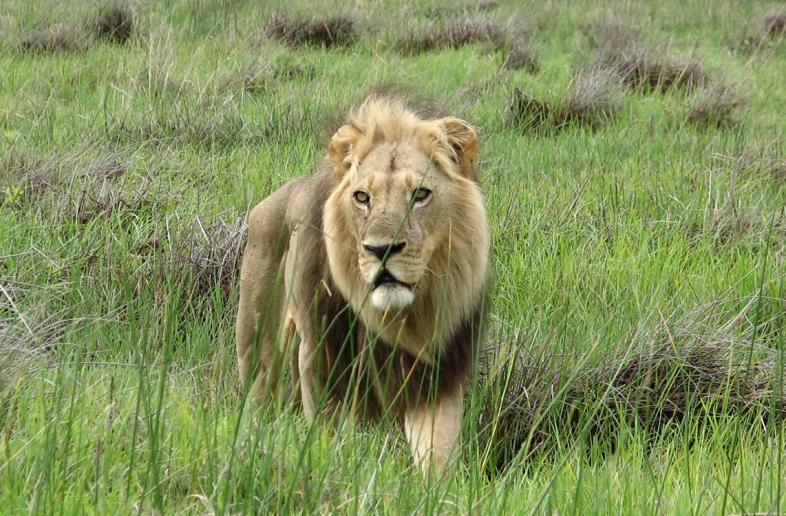 Zuid-Afrika en eSwatini wildlife & Zulukust