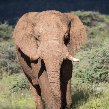 Erindi Game Reserve Namibië
