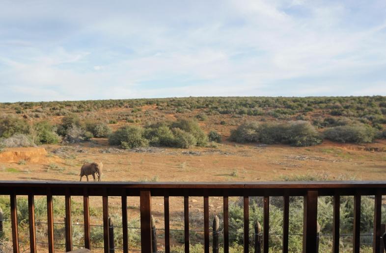Addo Elephant Restcamp – Campsite