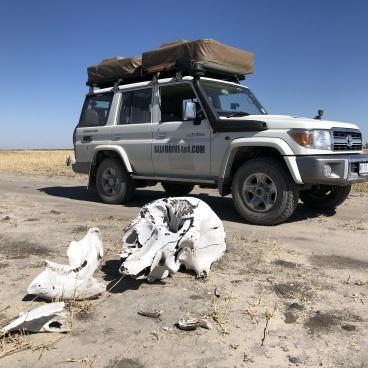 Botswana Landcruiser 4x4
