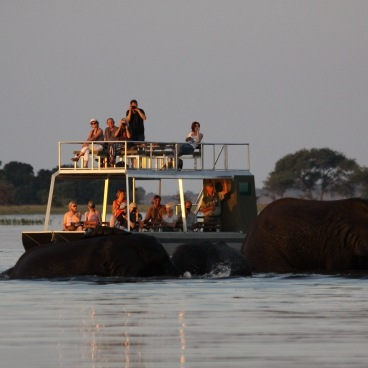 Boat excursion Chobe